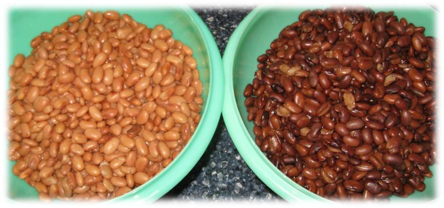 Cooked Pinto Beans - Copyright Your Family Ark LLC