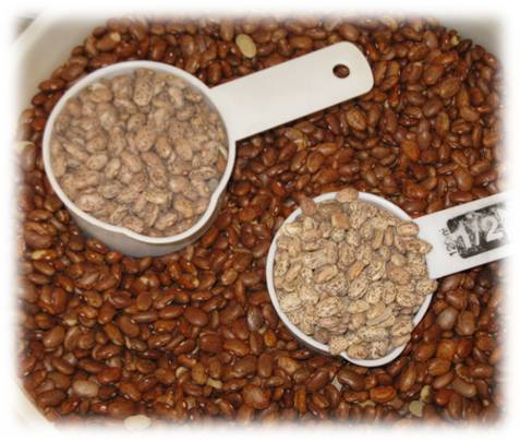 Pinto Beans - Storage Conditions Matter - Copyright Your Family Ark LLC