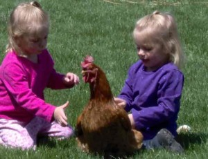 Playing with the Hen - Copyright Your Family Ark LLC