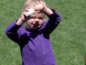Egg Harvest - Copyright Your Family Ark LLC