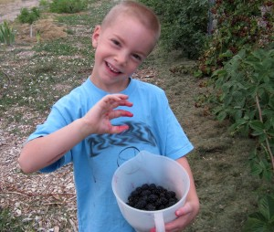 Blackberry Boy Copyright Your Family Ark LLC