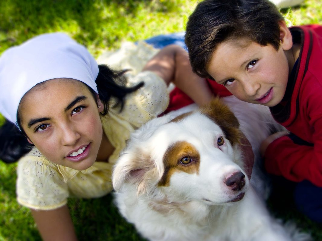 Could Your Dog Carry Ebola?