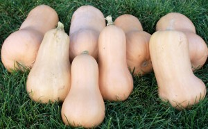 Butternut Squash - Copyright Your Family Ark LLC 2014
