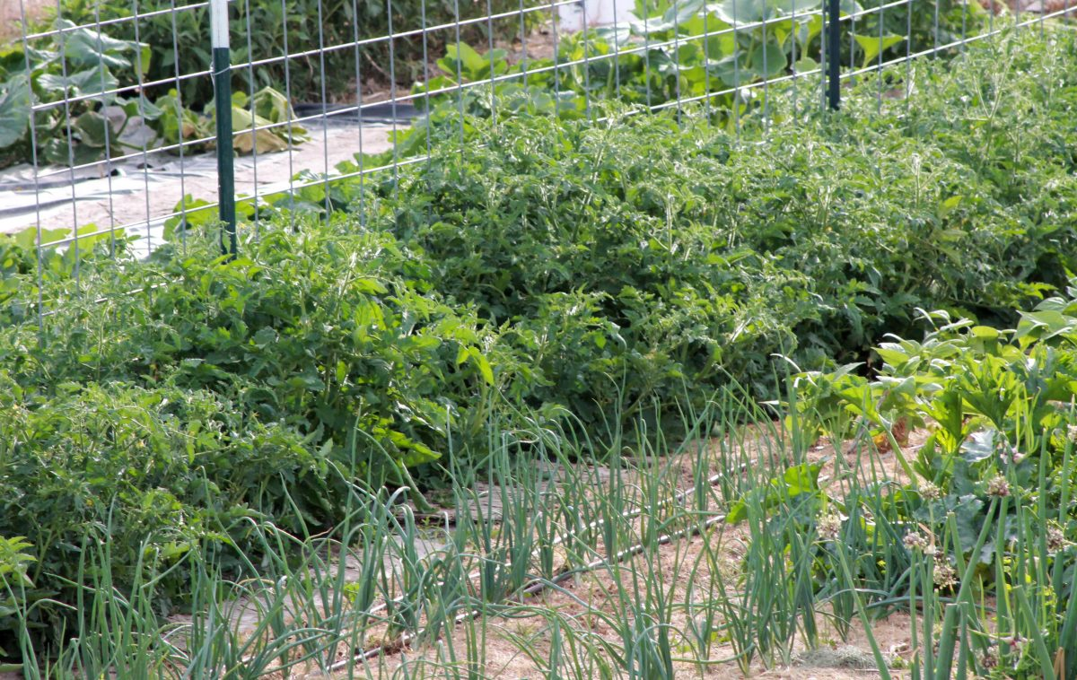 Clod's Survival Garden