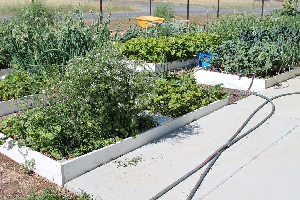 Kylene's Kitchen Garden - Copyright Your Family Ark LLC