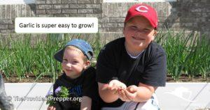 Boys in the Garden - Growing Garlic