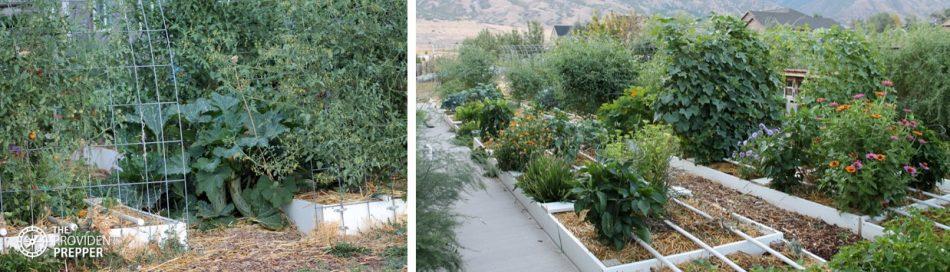 Kitchen garden uses vertical growing space.