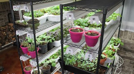 How to Grow an Indoor Survival Garden