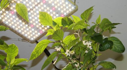 Spider Farmer SF-1000 Grow Light Review