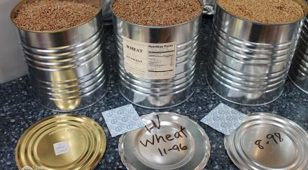 Food Storage: How to Store Wheat So It Is Still Delicious 31 Years Later